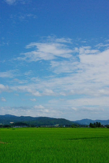 Yonesakasen_a1_imaizumiinukawa
