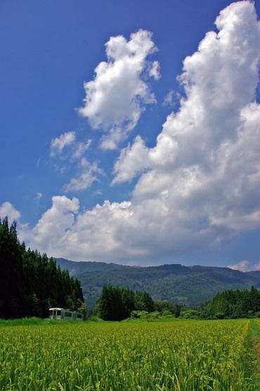 Yonesakasen_ogunikanamaru