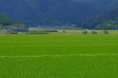 Yamaguchisen_71