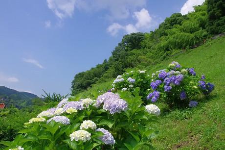 Yamaguchisen_6302_2