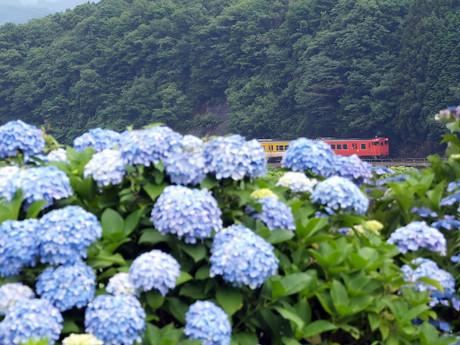 Yamaguchisen_716