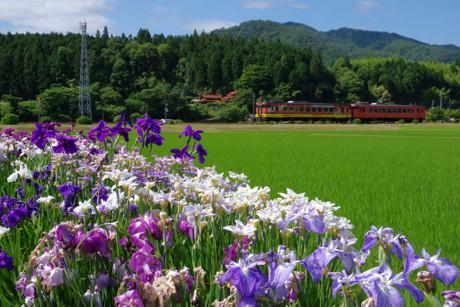Yamaguchisen_629