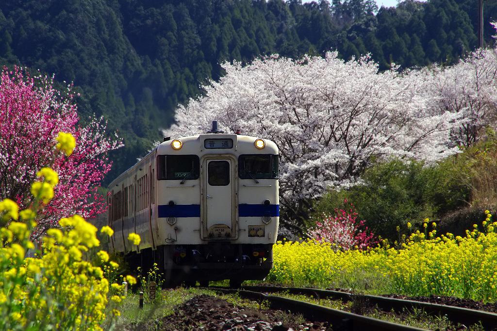 http://chinoko.cocolog-nifty.com/photos/uncategorized/2013/03/19/hitahikosansen_319.jpg