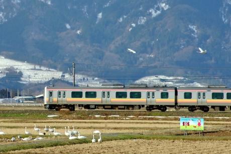 Echigosen-218