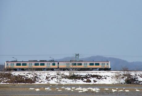 Echigosen-316