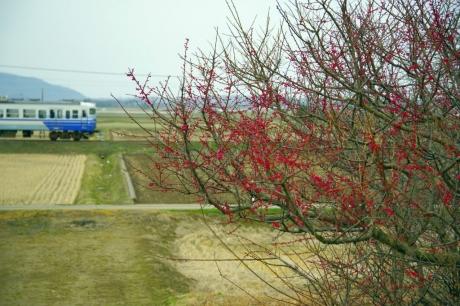 Echigosen-3212